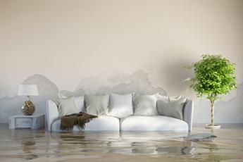 wasserschaden willy malerwerkstatt. Black Bedroom Furniture Sets. Home Design Ideas